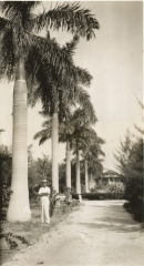 LHB_Royal_Palms