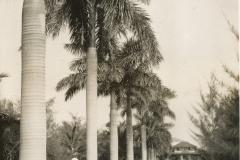 LHB_Royal_Palms
